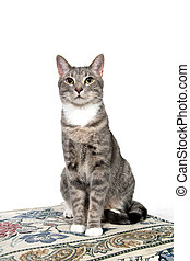 Cute adult cat on white - Cute adult cat sitting on cushion...