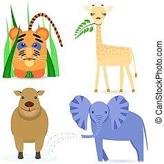 Cute Africa Animals