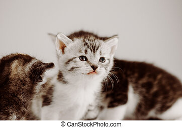 Cute amazing kittens. Group of  little kittens on studio background