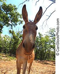 donkey - cute and funny donkey on the farm