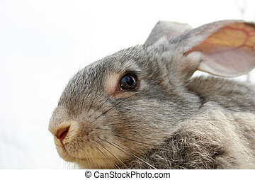 Cute animal - Image of cautious grey bunny outdoor