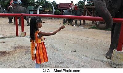 Cute Asian Girls Feeds Elephant - A brave little seven year...