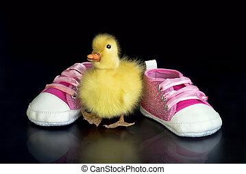 Cute Babe Duck.