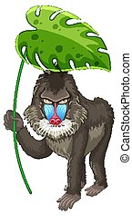 Cute baboon holding green leaf on white background