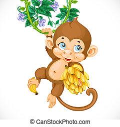 cute, baby abe, hos, banan, isoleret, på, en, hvid baggrund