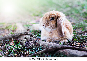 Cute Baby Bunny rabbit - Photo of cute baby bunny rabbit...