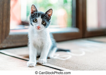 Cute Baby Cat Portrait At Home