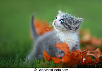 Baby Kittens Playing Outdoors in the Grass