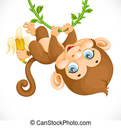 Cute baby monkey with banana hanging on the vine isolated on a white background