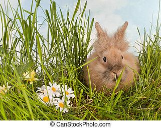 Cute baby rabbit in grass