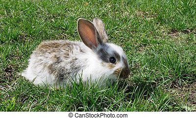 cute baby rabbit on green grass