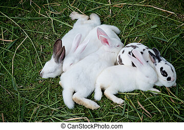 Cute baby rabbits are sleeping.