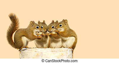 Cute baby squirrels sharing seeds.