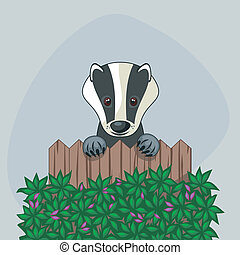 Cute Badger - Cute badger standing up over somebody's wooden...
