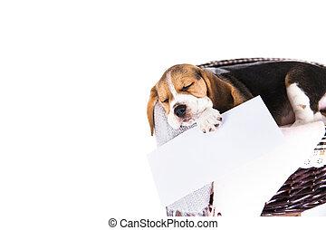Cute beagle dog in wicker basket