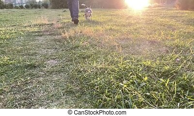 Cute beagle dog outdoor with her male owner. Slow motion. ...