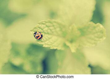 Cute beetle on green leaf nint background