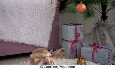 Cute beige rabbit resting in studio - Video footage of ...