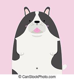 cute big fat French Bulldog