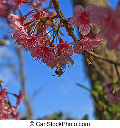 Cute bird sitting on blossom tree b