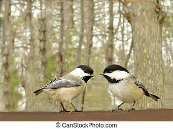 Cute Bird - Two chickadees ourdoors