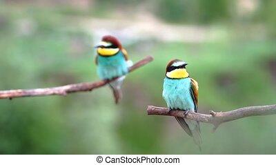 cute birds sit on a slow motion branch, bird life