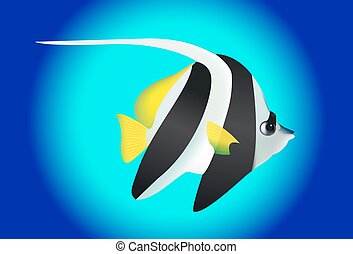 Cute black and white angel fish
