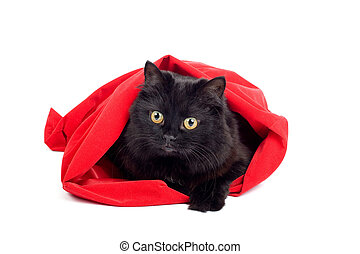 cute black cat in a red bag isolated
