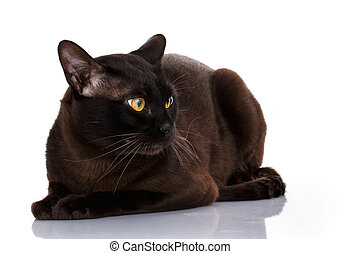 Cute black cat isolated
