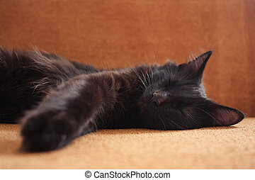 cute black cat lies on the couch at home