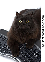 cute black cat over keyboard isolated