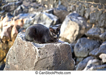 black cat sitting on a rock