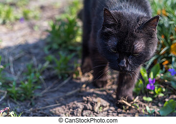 Cute black cat walking on flowerbed in the garden