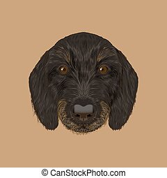 Cute black curly face of domestic puppy on yellow background