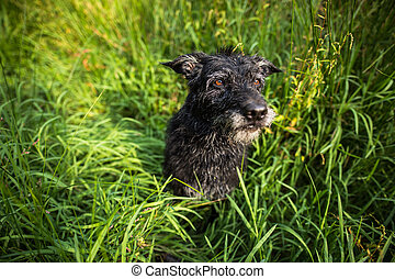 Cute black dog in green grass