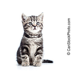 cute black kitten cat isolated on white
