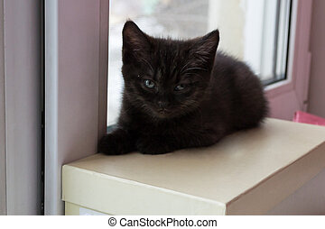 cute black kitten sitting on a box looking in the camera