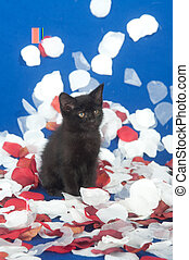 cute black kitten with rose petals