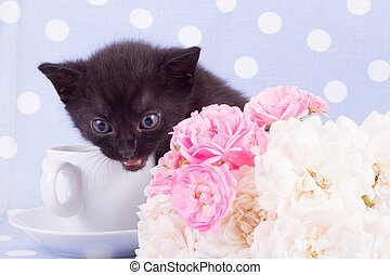 Cute black kitten with rose