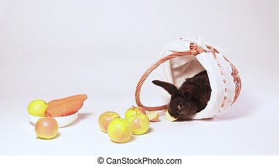Cute black rabbit in a wicker basket on a white background with apples and carrots. Food for rabbits. Balanced pet food. Nice funny pets video.