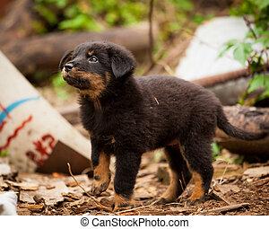 Cute black stray dog puppy