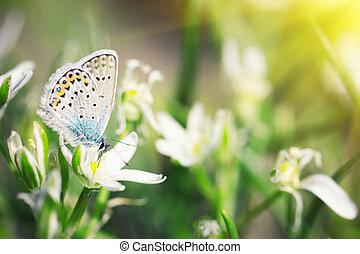 cute blue butterfly sitting on