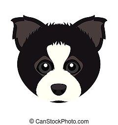 Cute border collie dog avatar