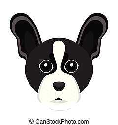 Cute Boston Terrier dog avatar