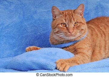 Cute brown cat lying on sofa