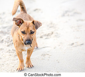 Cute brown puppy on a beach - pet dog photography in natural environment