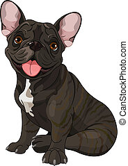 Cute bulldog - Cute French bulldog, sitting in front of...