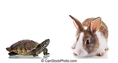 Bunny and Turtle