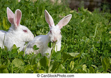 Cute bunny rabbits sitting on green grass in garden
