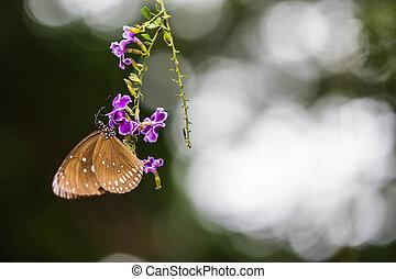 cute butterfly on purple flowers